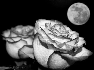 Amour Noir Et Blanc